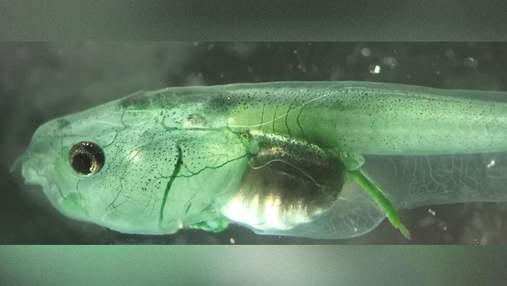 Життя без дихання: вчені створили істоту, здатну вижити у середовищі, де немає кисню