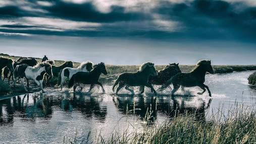 Когда человек приручил лошадей: ученые раскрыли тайну