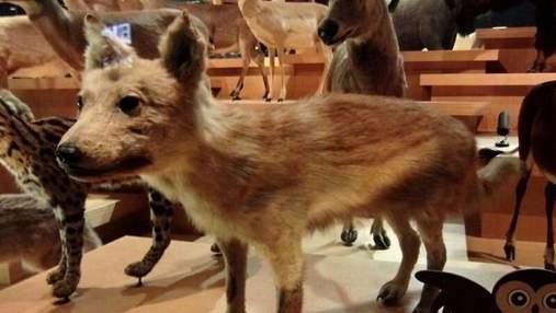 Ученые рассказали, от какого животного произошли все собаки мира: интересное объяснение